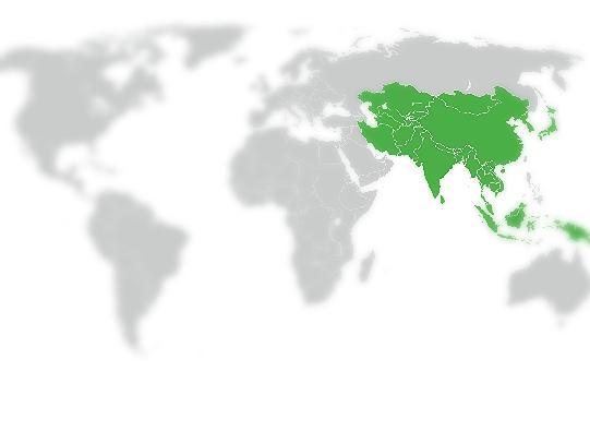 Asia, China & EU International Desk