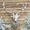 Thumbnail: Large Silver Stage Resin Deer Head Wall Mounted