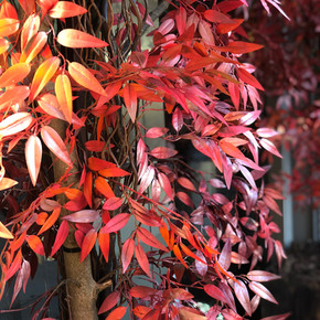 Hakkasan Restaurant Install for Autumn s