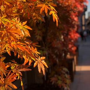 Hakkasan Restaurant Install for Autumn_M
