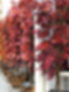 Hakkasan Autumn tree install at Sake no