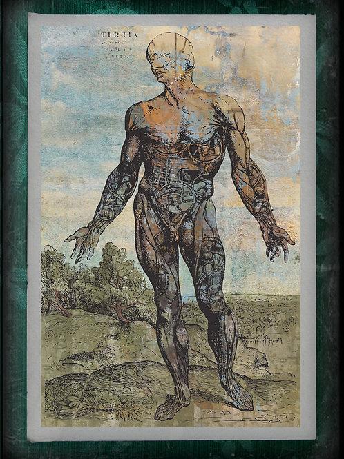 Anatomical Steam Punk Man. 'De humani corporis fabrica'. 1543
