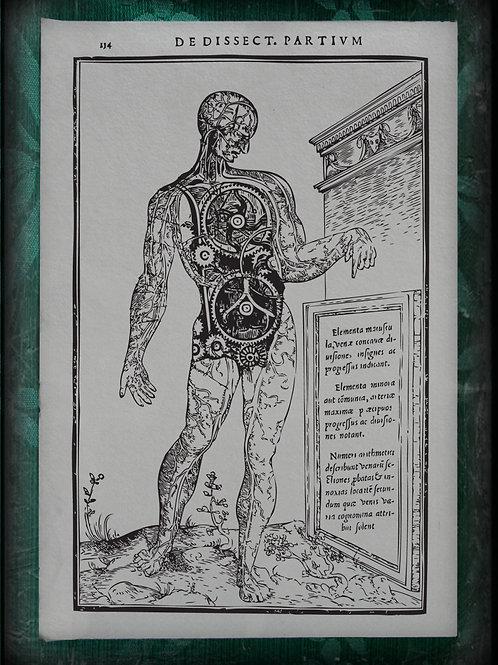 De Dissectione Partium. Steampunk Man . 1545