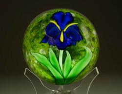 Cobalt-Iris-over-Green chris sherwin