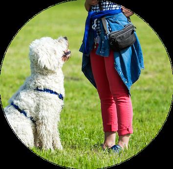 ÖTK Hundezertifikat-Intensivkurs