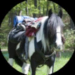 Packpferde rund online.png