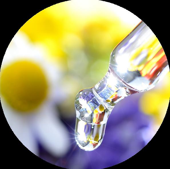 Bachblüten in der Energetik Modul 3