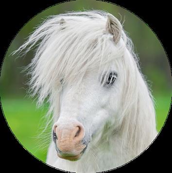 Psychotherapeutische Medizin mit Pferden