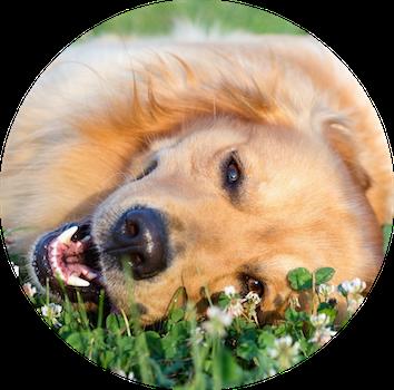 Basismodul - Basics des Systemischen Tiertrainings