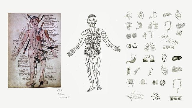 人体.jpg