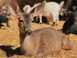 The Lemos Farm Petting Zoo