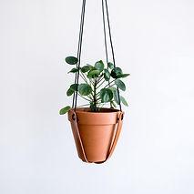 Plantenhanger.jpg