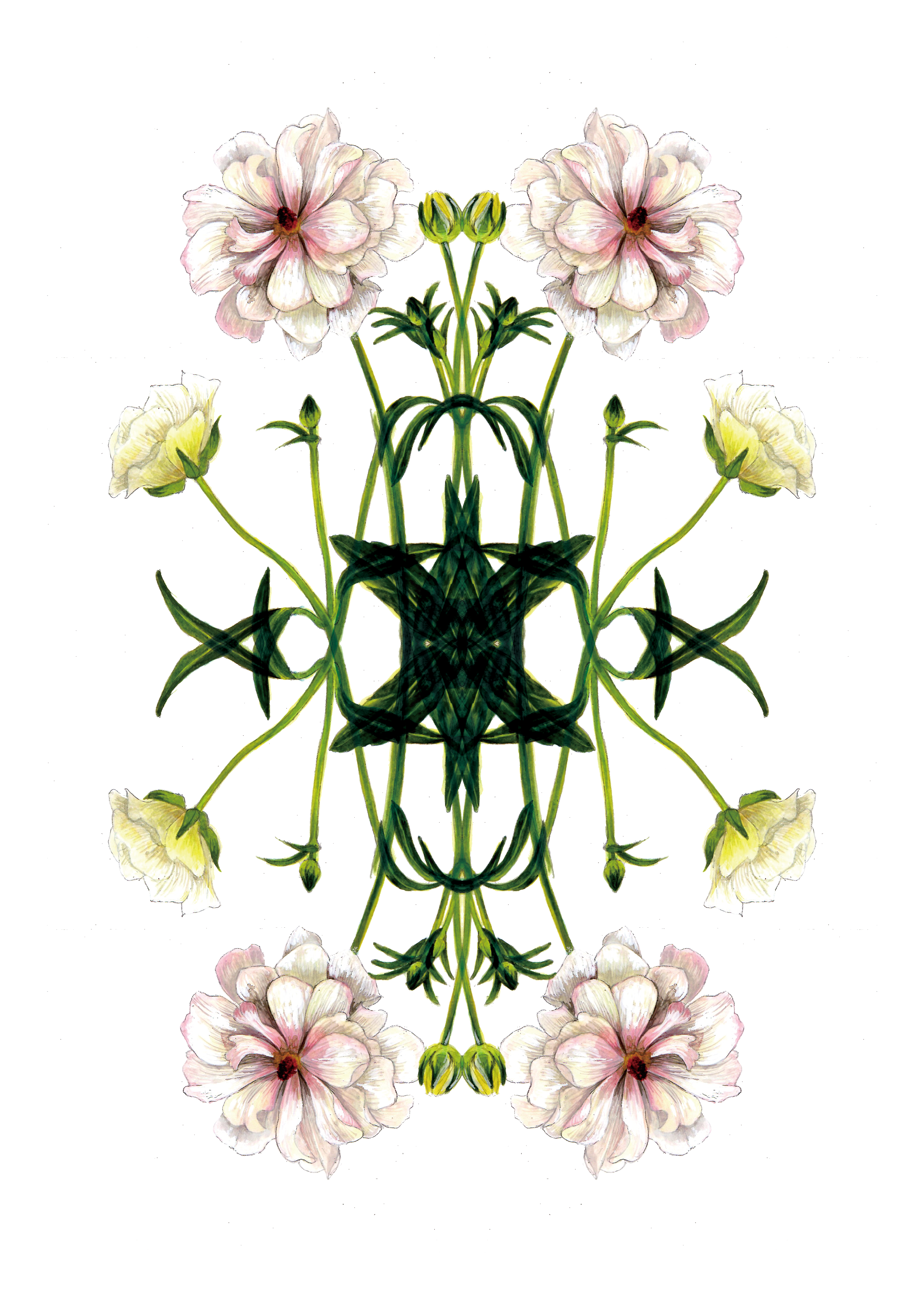 plants54