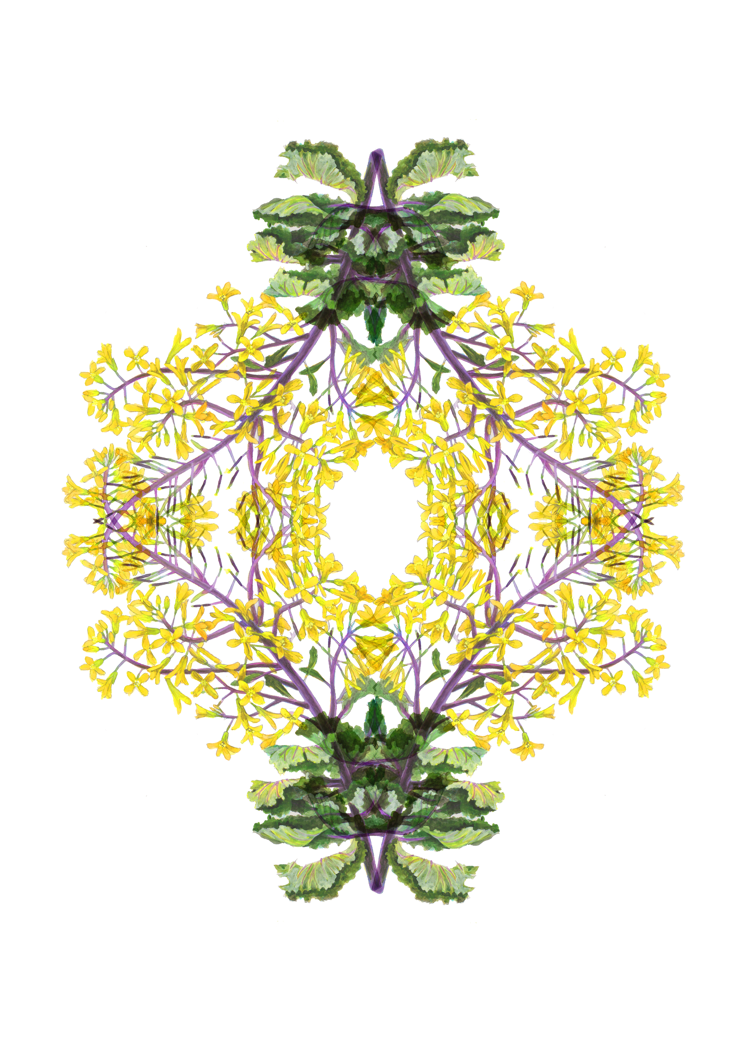 plants60