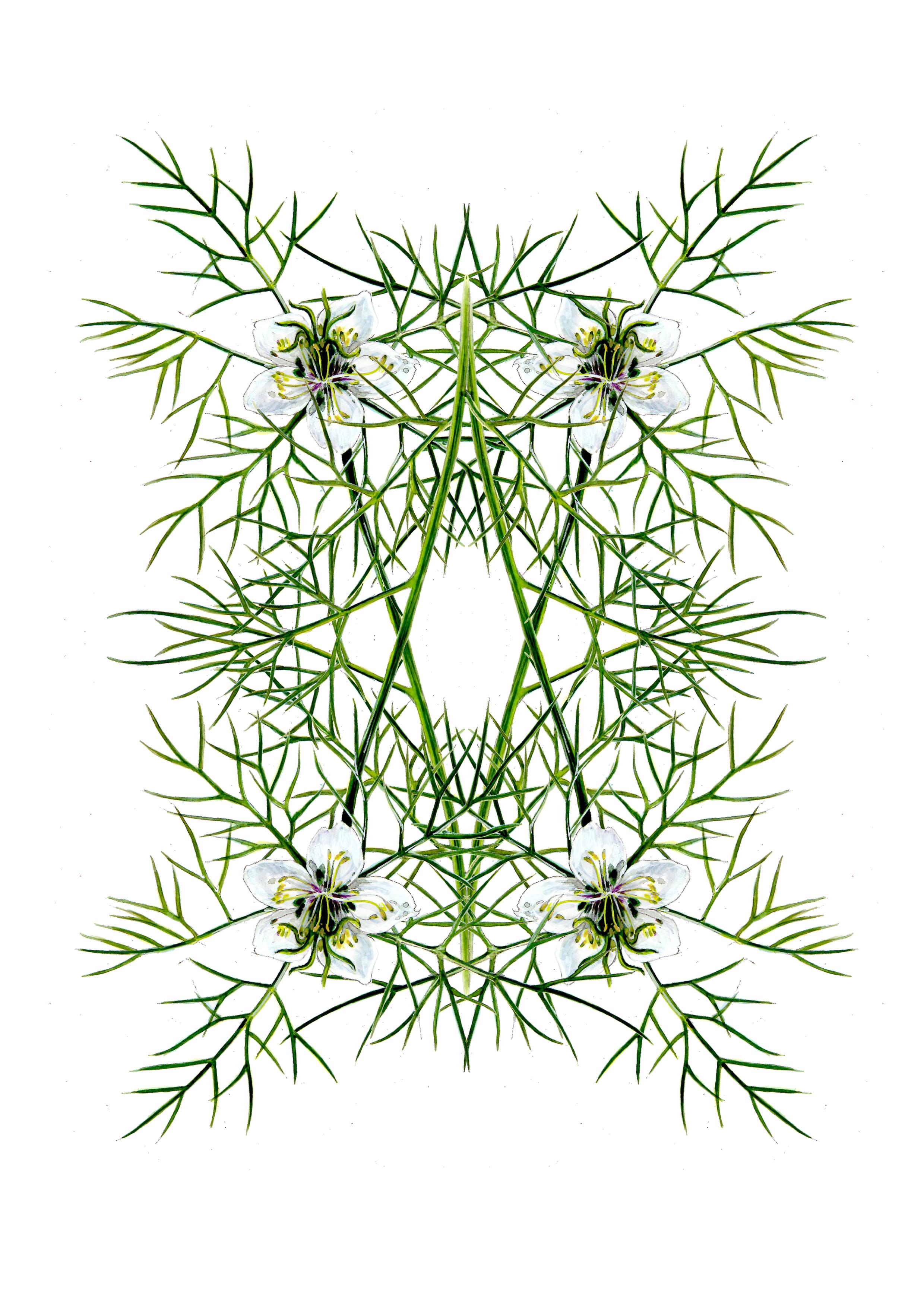 plants53
