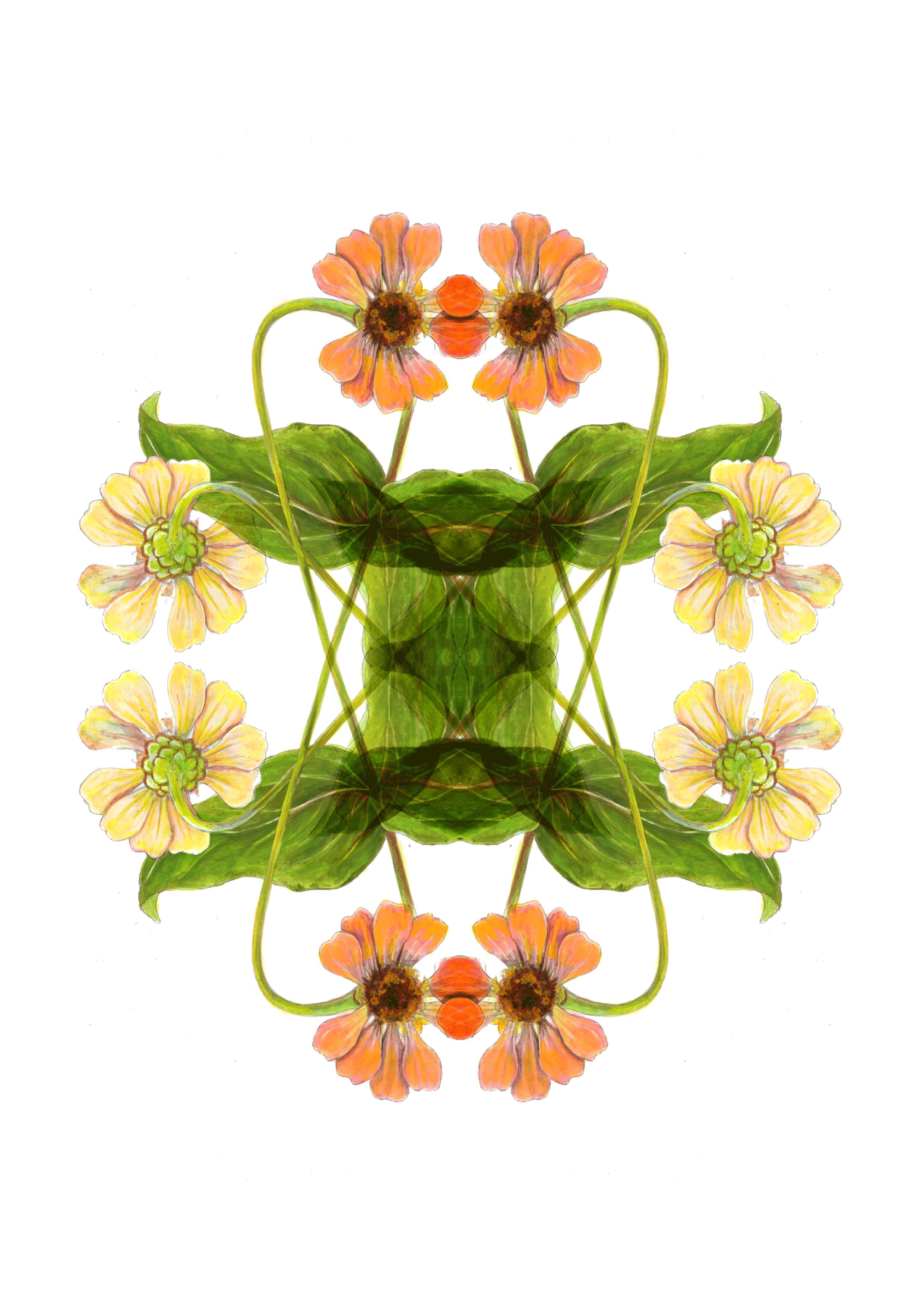 plants42