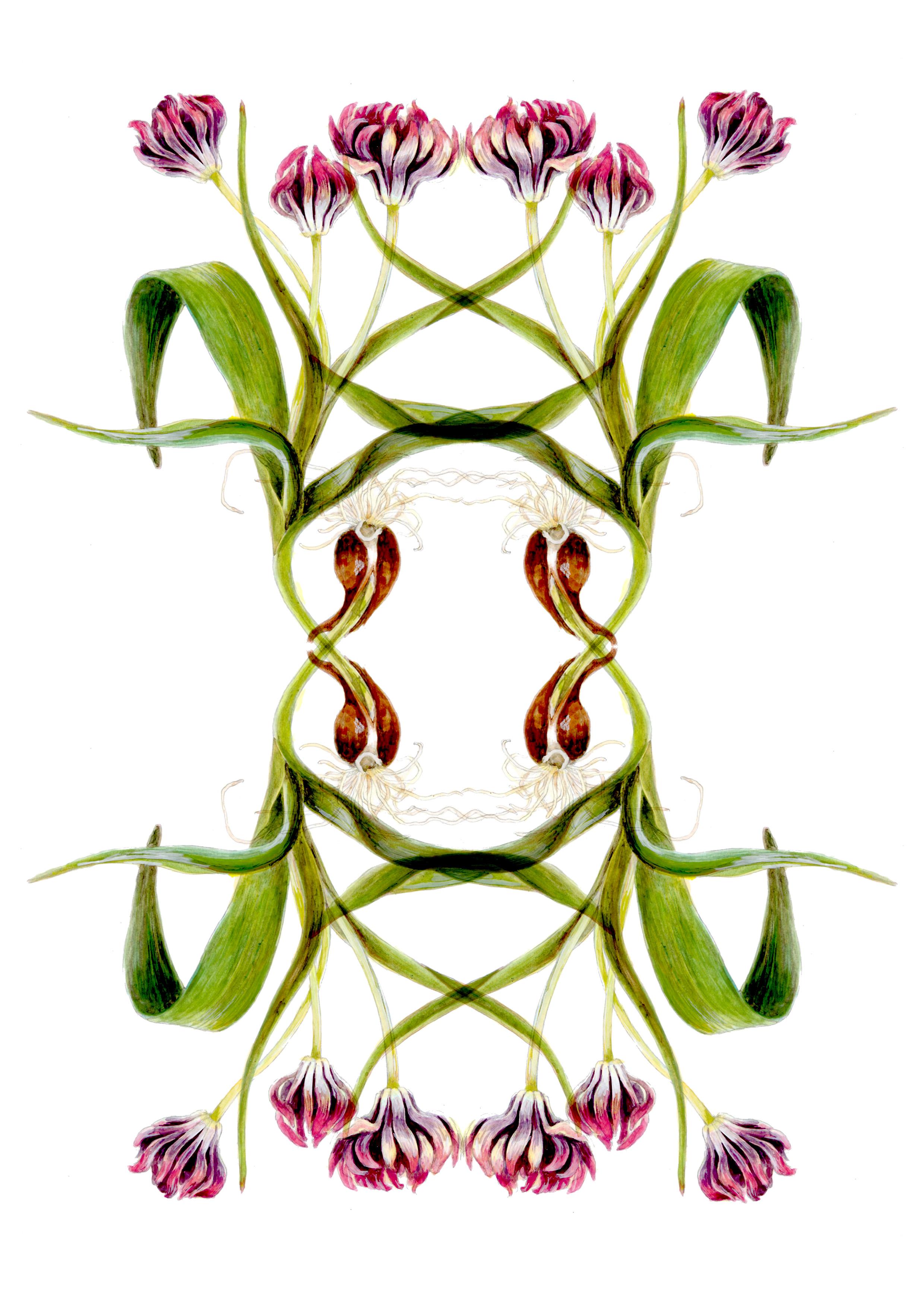 plant36