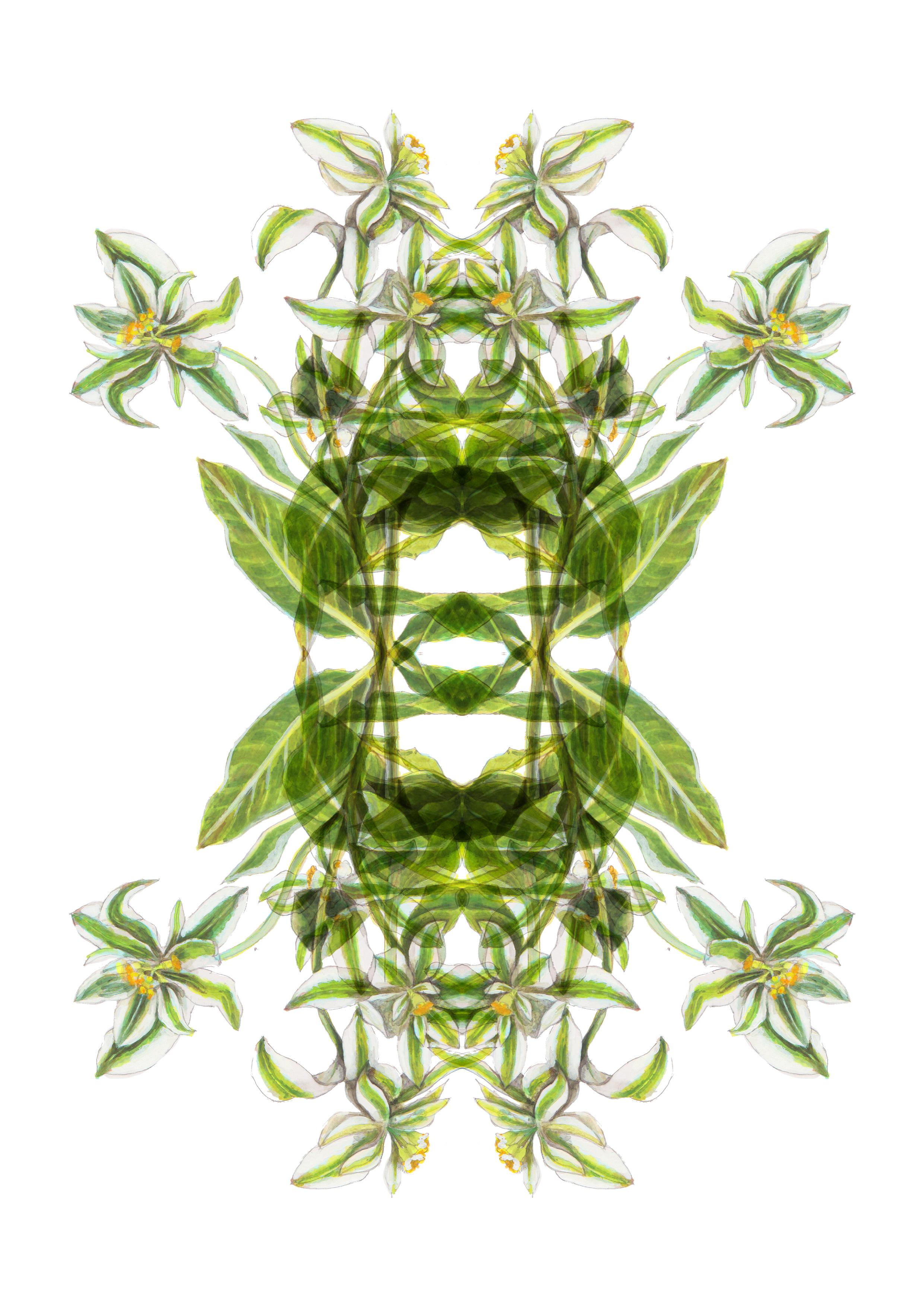 plants69