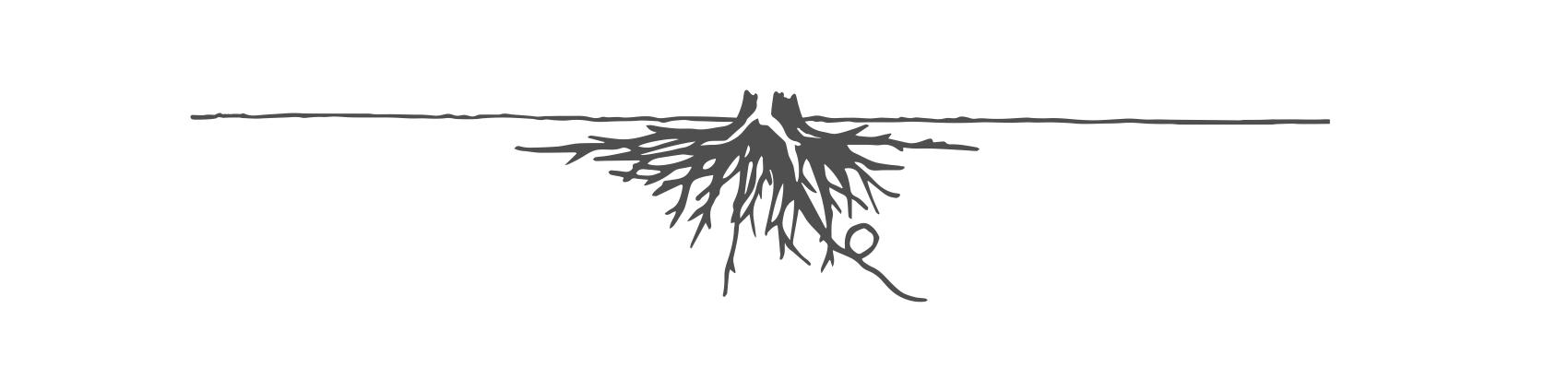 植物について mark