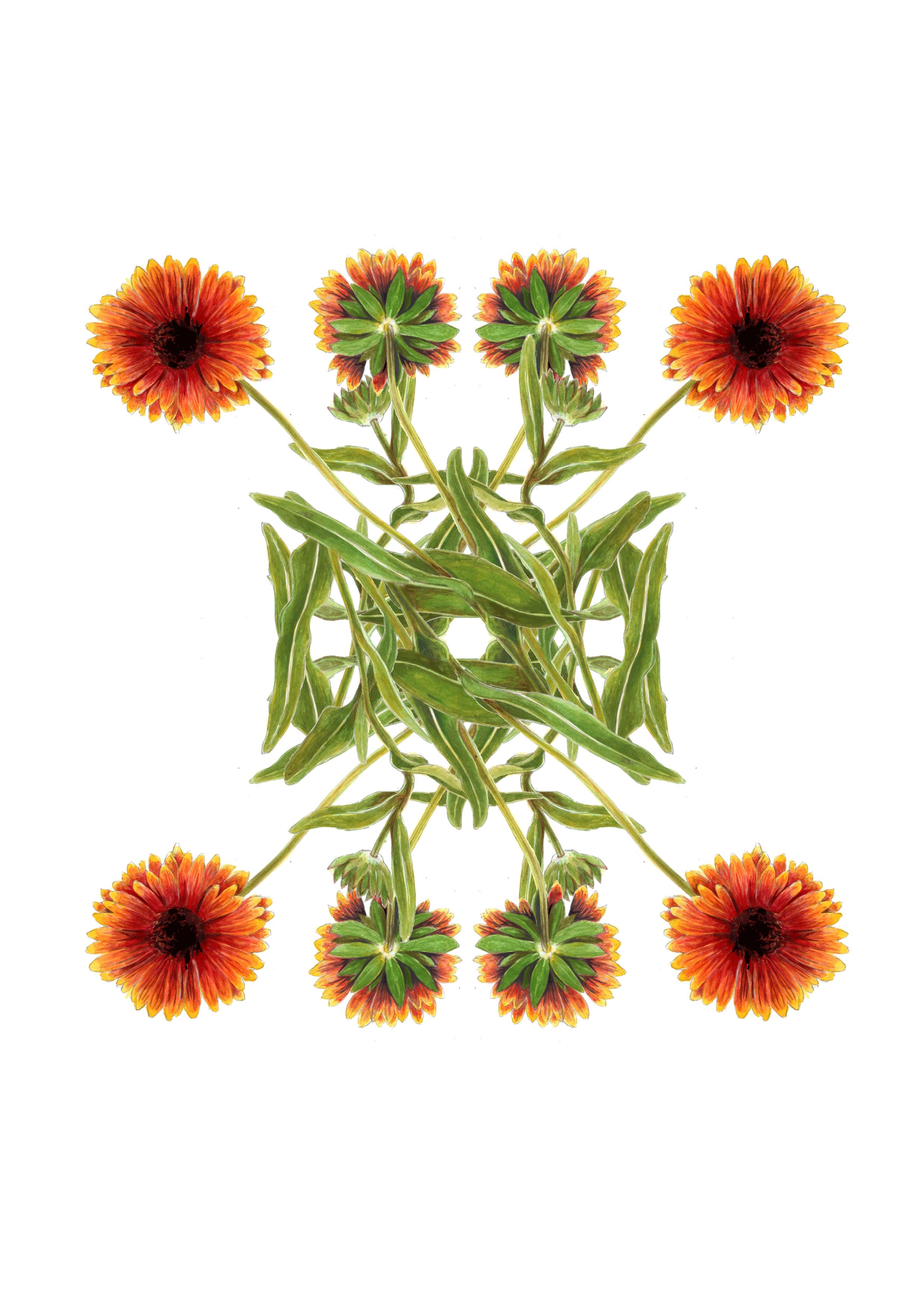 plants44