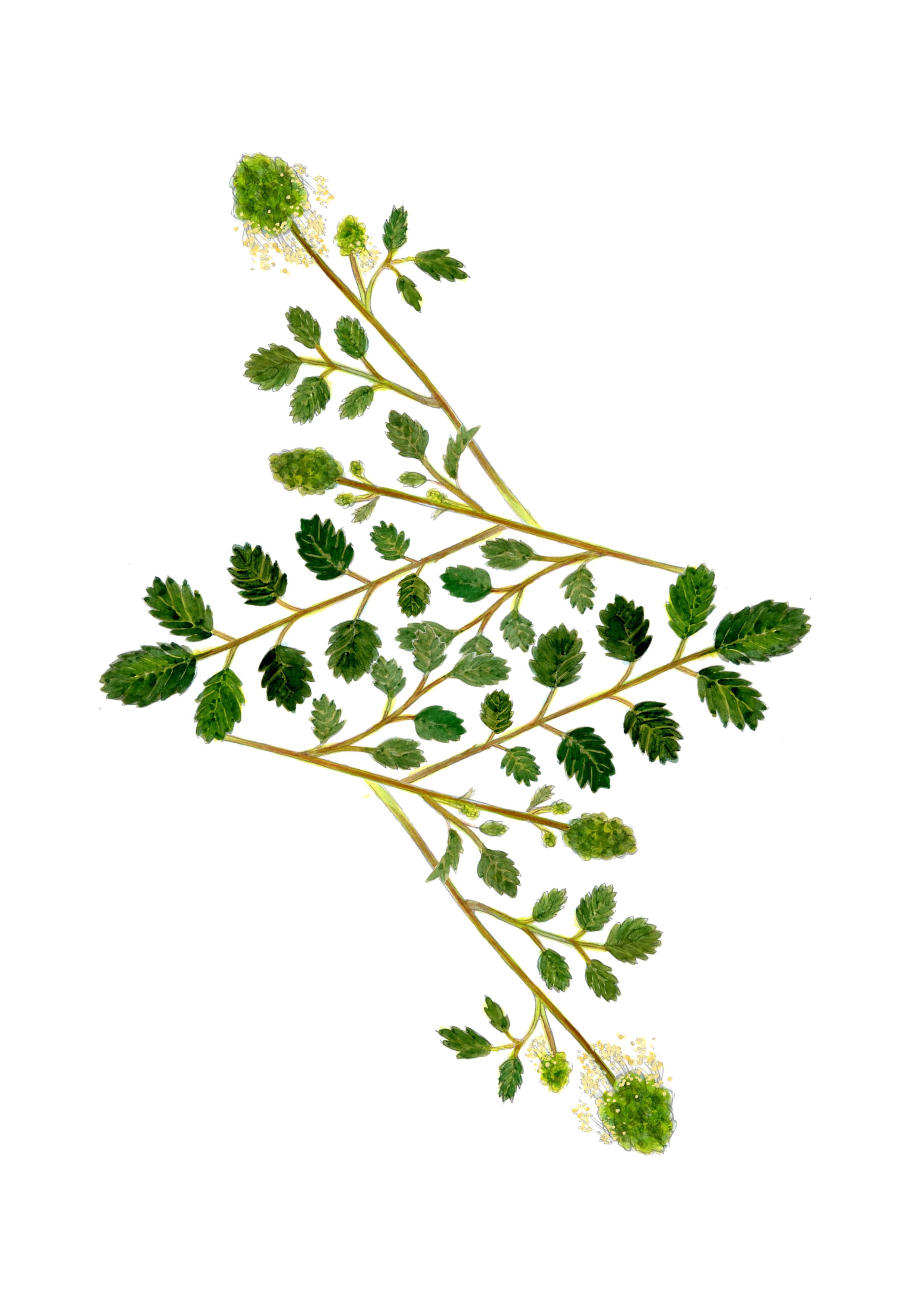 plants28