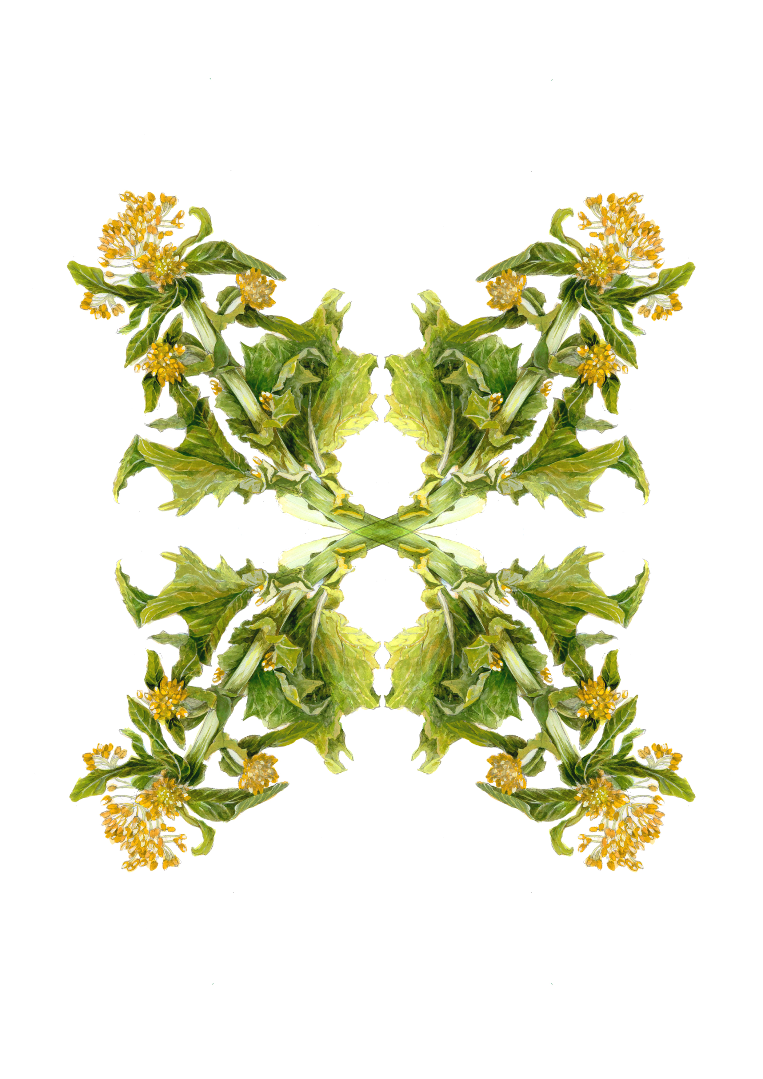 plants34
