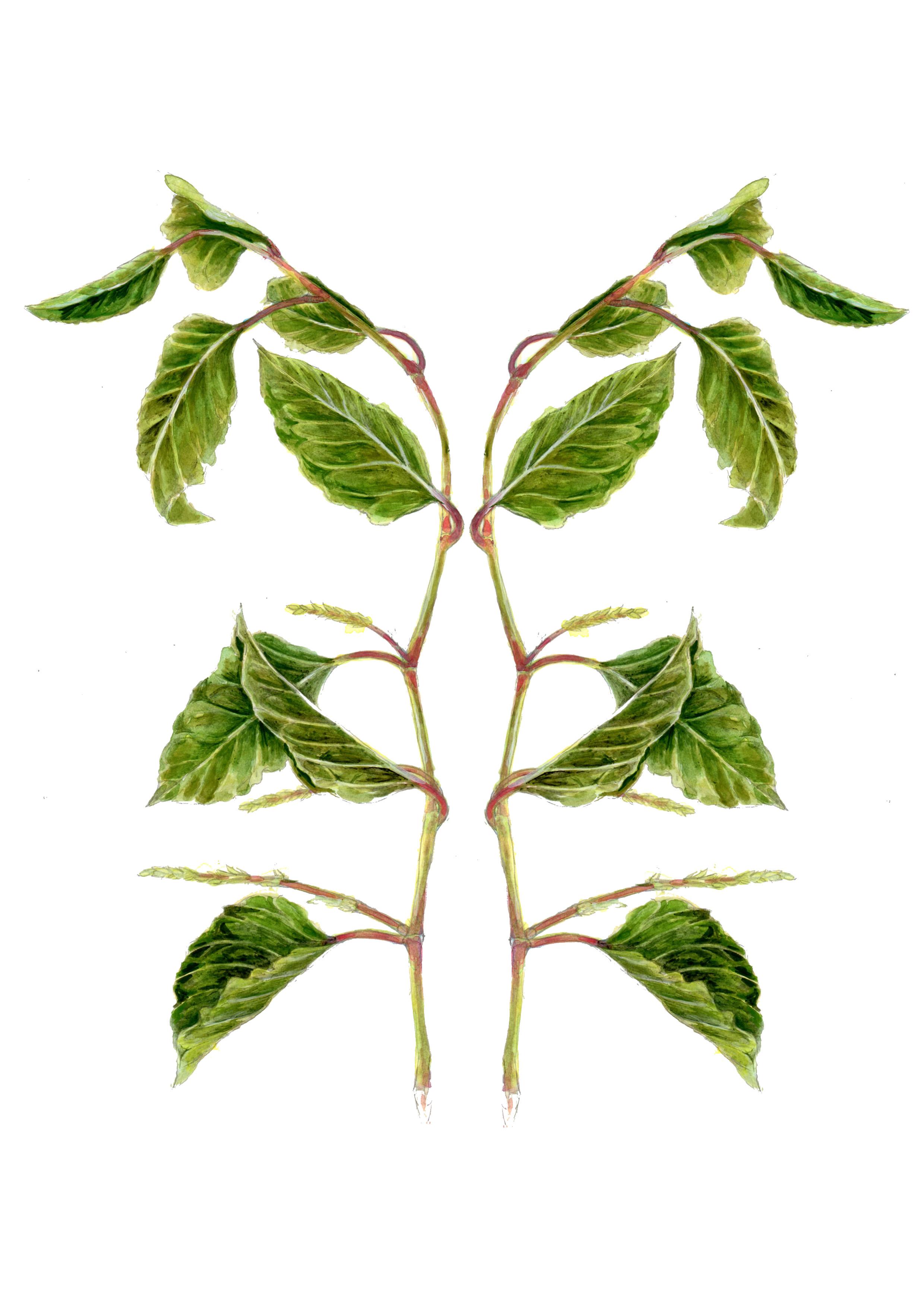plant15