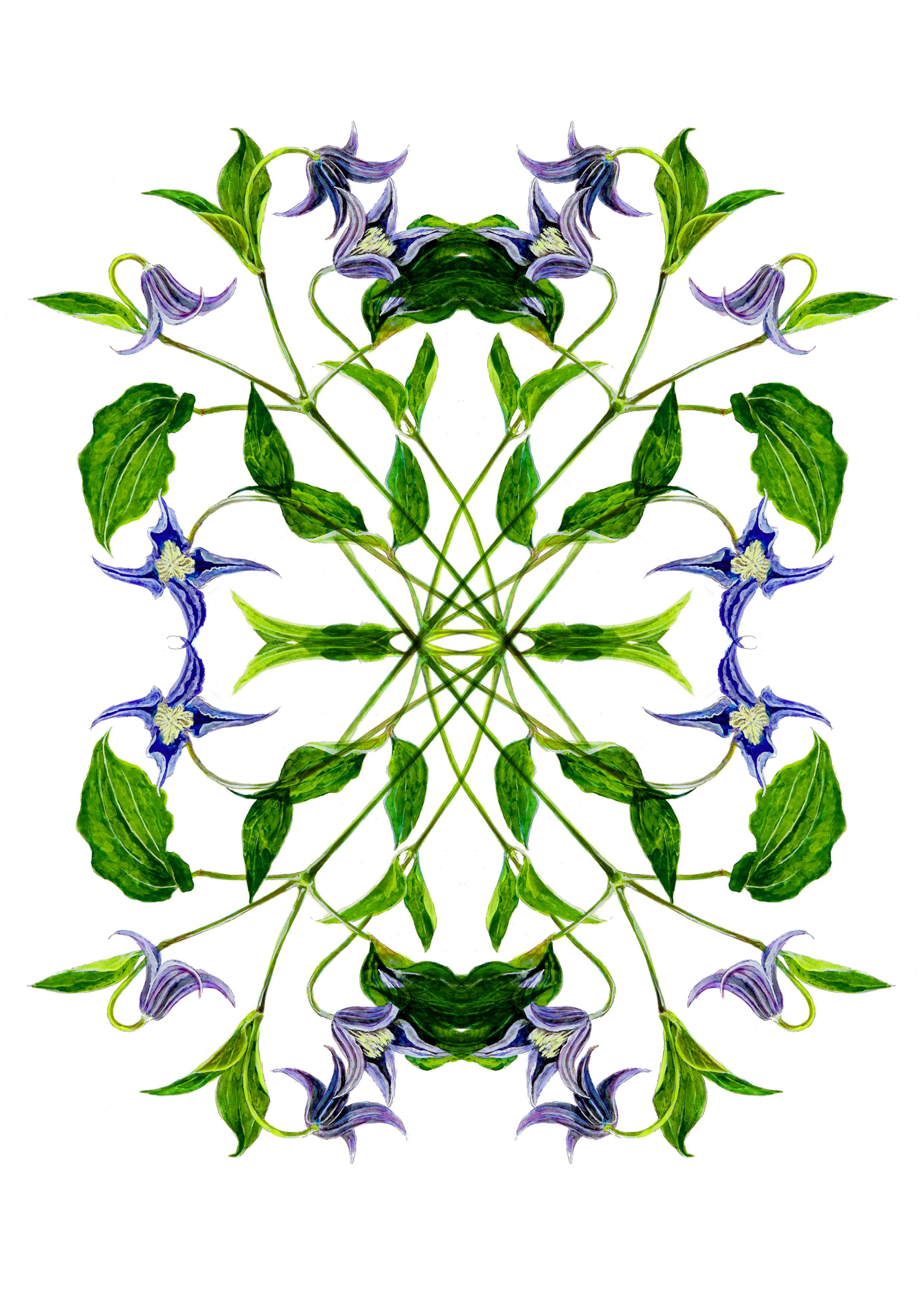 plant55