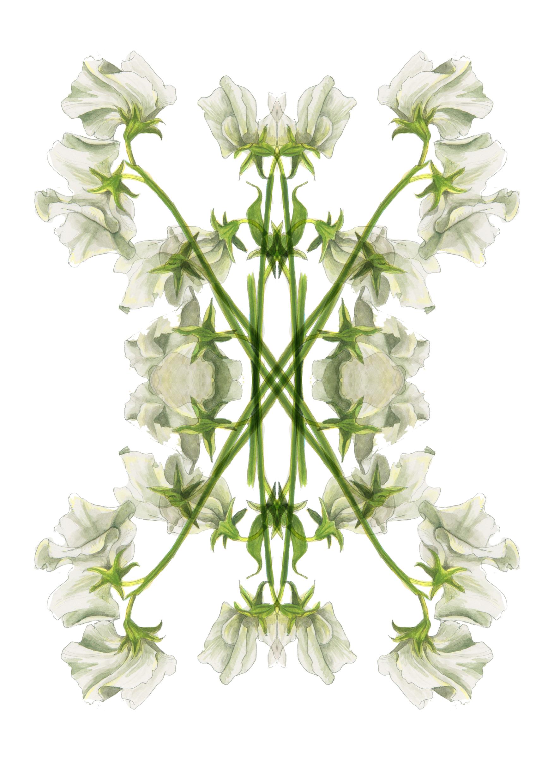 plants61