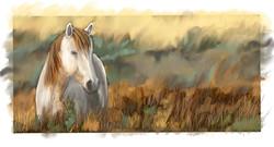 Prairie Pony (custom size only)