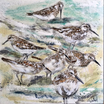 Sand Pipers