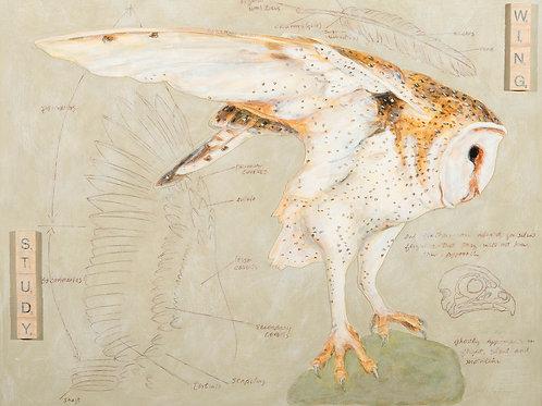 Wing Study, Artist Martha Worthy