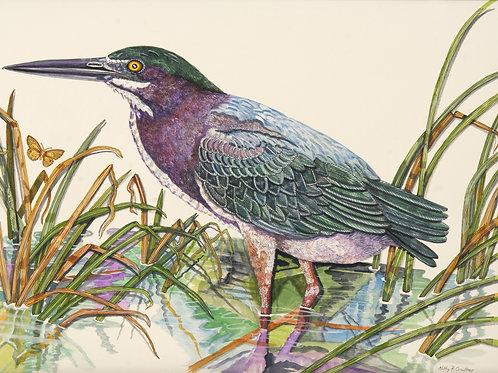 """Green Heron in Marsh"" - Kathy Crowder"