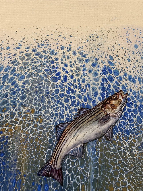 """Bay Feeding"" Striped Bass - Pamela Corwin"