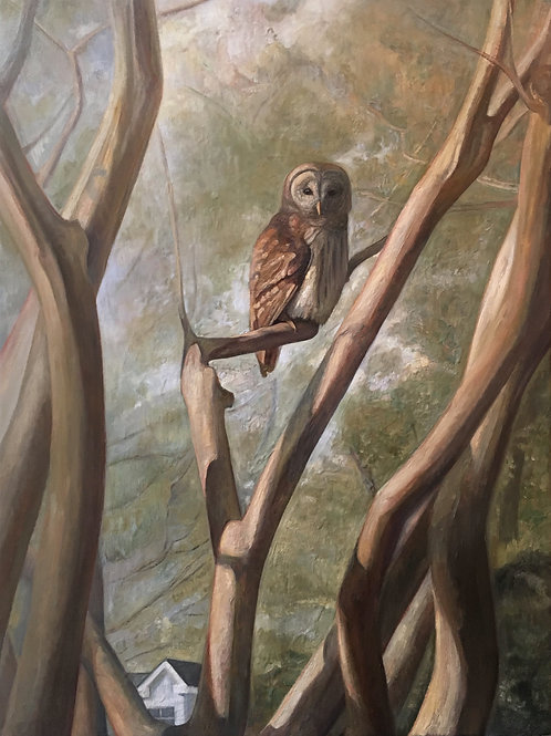 Barred Owl in Crepe Myrtle