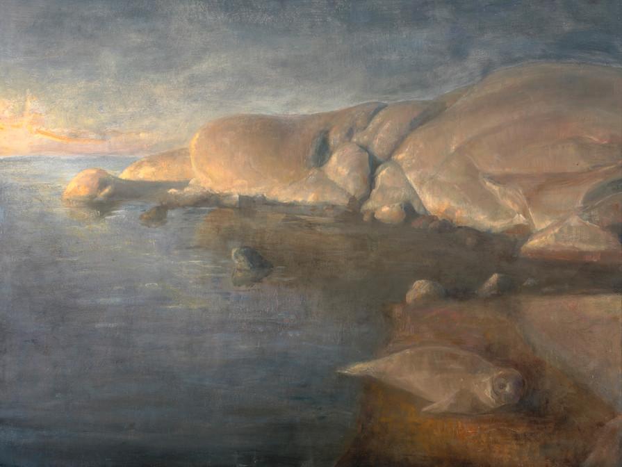 Seal Pup at Dawn
