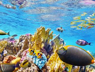 La gran barrera de Coral, una aventura llena de colores