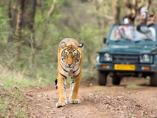 Vida salvaje en la India