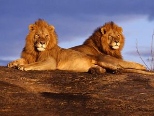Tips para tu viaje a Kenia y Tanzania