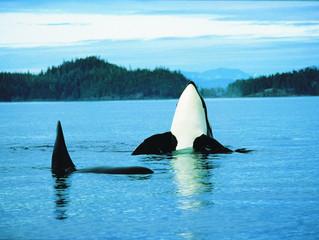 ¿Sabías que en Canadá también puedes ver ballenas?