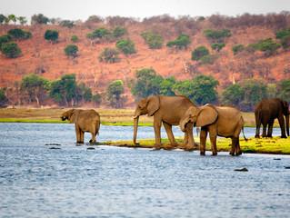 Cuando hacer un safari por África