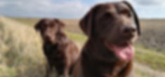 Maggie's dog walking and animal care in Letchworth and Baldock. Friendly, professional, small scale