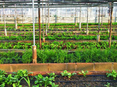 Framtidens mat är ekologisk och odlas i städerna