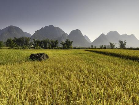 Ökad näringsbrist vid högre koldioxidutsläpp – men rätt jordbruk kan lösa problemet