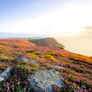 Isle of Man gives the green light for medical cannabis production