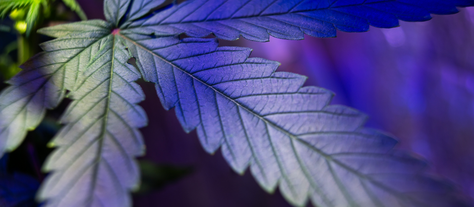 Medical cannabis education for the Royal College of Paediatrics and Child Health