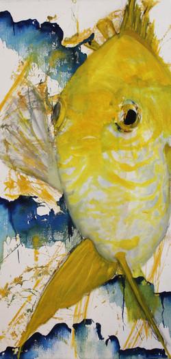 poisson jaune et blanc 1