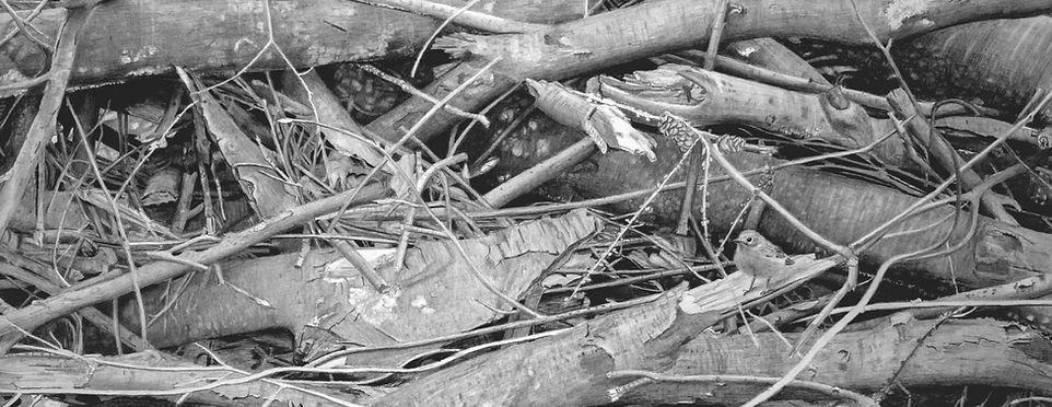 Holzeinschlag 3.JPG