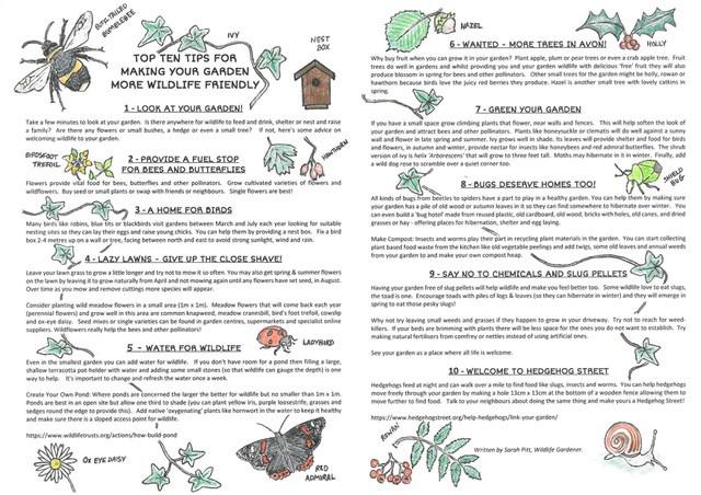 Top Ten Tips for Wildlife Friendly Garden
