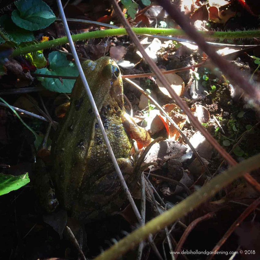 Frog appeared from under plant